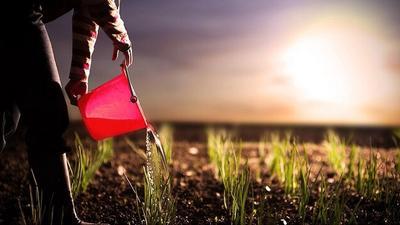 Как получить землю под фермерское хозяйство